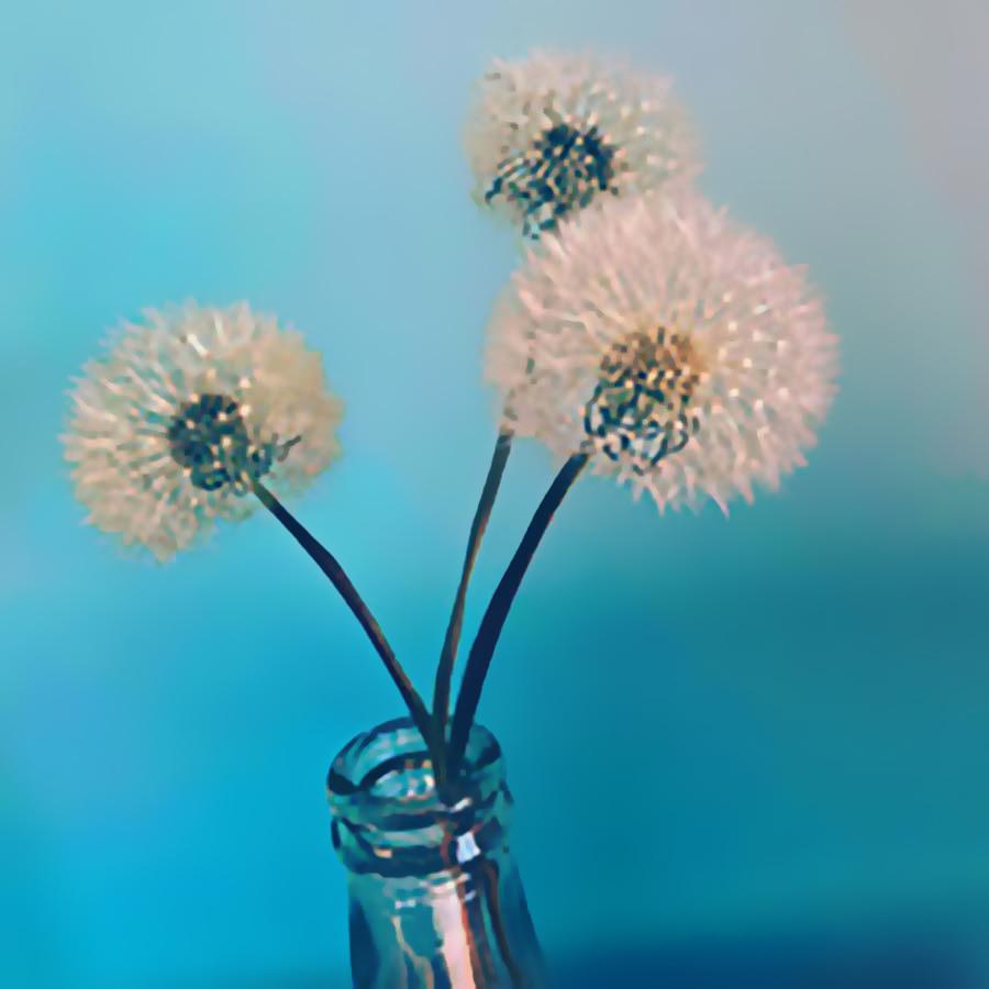 drei Pusteblumen in einer Vase